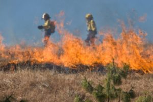 2021 Wildfires: Increasing the Heat on the Climate Crisis