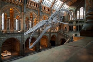Broadening knowledge of Sustainability through Museums